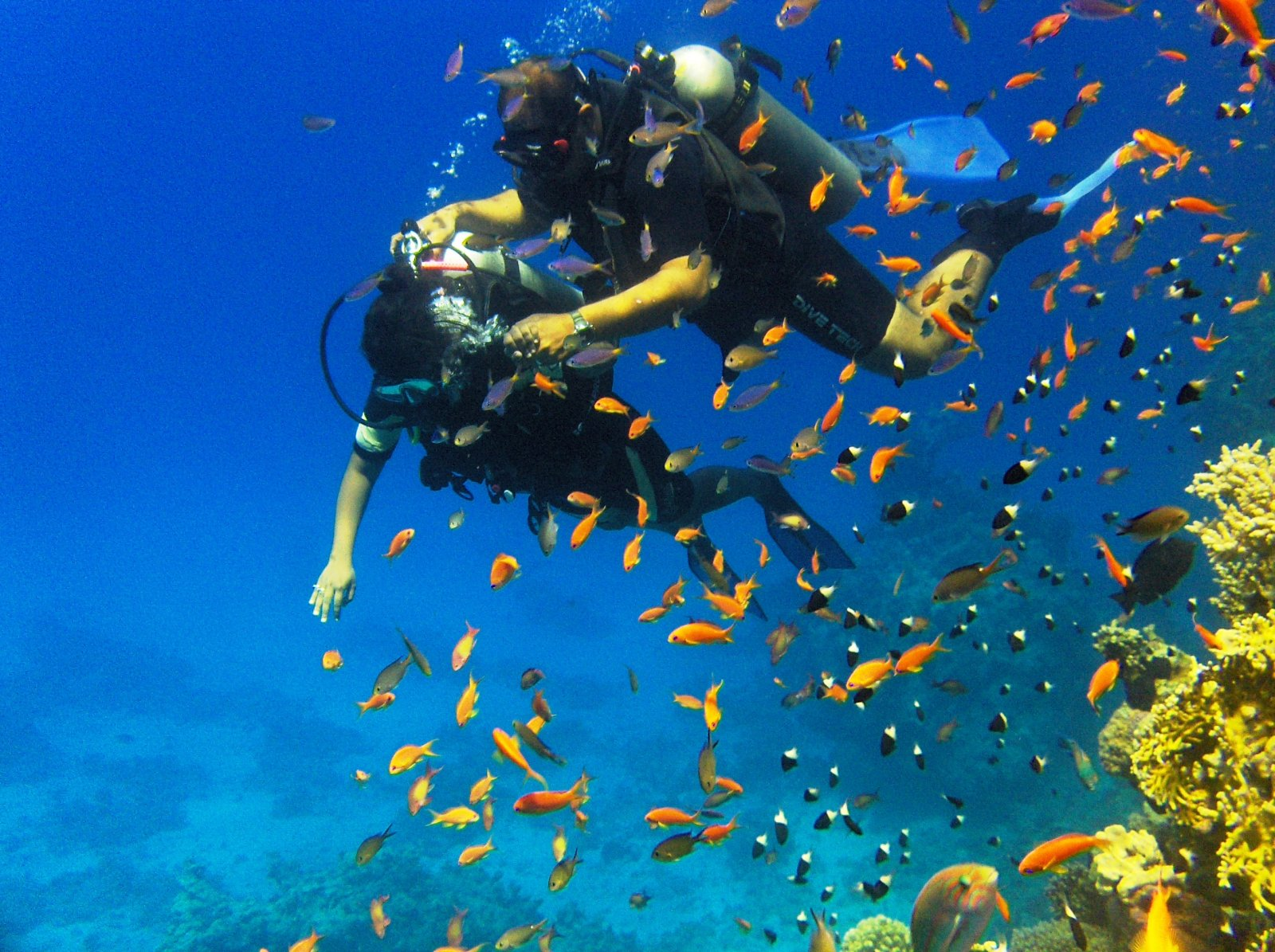 Дайвинг (погружение в море с аквалангом) из Шарм-эль-Шейха