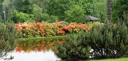 Ботанический сад в Москве
