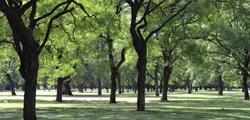 Палермские леса Буэнос-Айреса