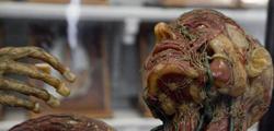 Анатомический музей университета Базеля