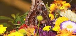 Парк бабочек в Екатеринбурге