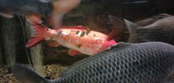 Музей-аквариум «Рыбы Амура» в Хабаровске