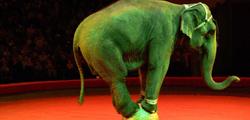 Цирк в Ярославле