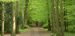 Лесной парк Харлеммерхаут