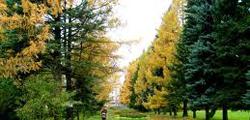 Ботанический сад Витебска