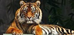 Владикавказский зоопарк