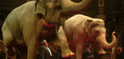 Сочинский государственный цирк