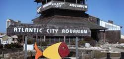Аквариум Атлантик-Сити
