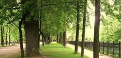 Парк Юбилейный в Ярославле