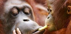 Зоопарк Остравы