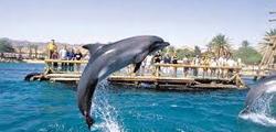 Пляж «Дельфиний риф»
