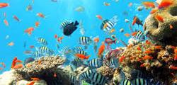 Пляж «Коралловый риф»
