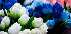 Цветочный рынок «Блуменмаркт»
