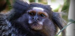 Парк обезьян на Тенерифе