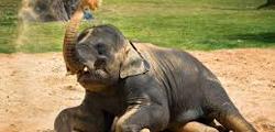 Зоопарк Хьюстона