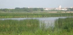 Птичья гавань Омска