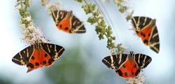 Долина бабочек на Родосе