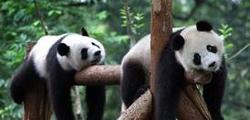 Шанхайский зоопарк