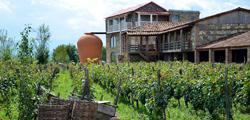 Винный завод «Шуми» в Цинандали