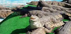 Крокодиловая ферма в Ялте