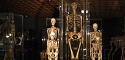 Анатомический музей в Инсбруке