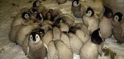Зоологический музей в Самаре