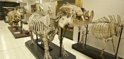 Музей зоологии в Брюсселе