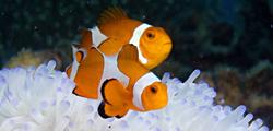 Центр «Коралловый риф»