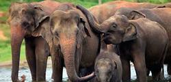 Убежище слонов на Пхукете