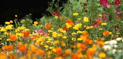 Ботанический сад Клайпедского университета