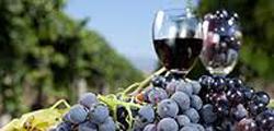 Фестиваль вина и еды в Мельбурне