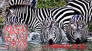 Килиманджаро, Танзания — города и районы, экскурсии, достопримечательности Килиманджаро от «Тонкостей туризма»